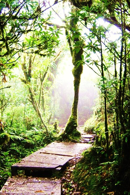 bosque-en-costa-rica