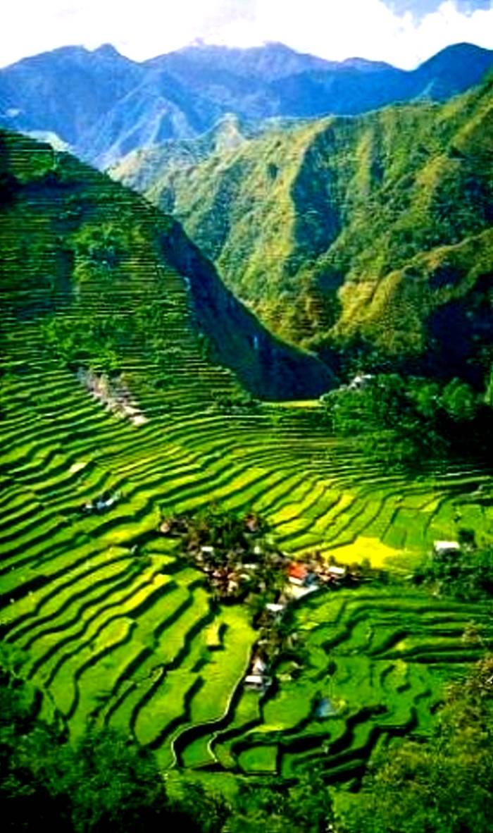 Las terrazas del arroz las creencias y la nuez de betel Imagenes de terrazas